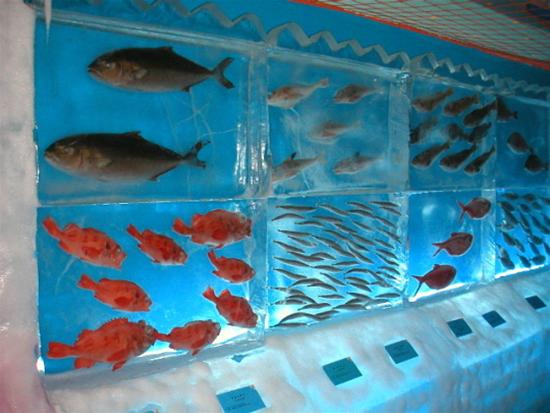 Frozen aquarium, Kesennuma, Miyagi Prefecture
