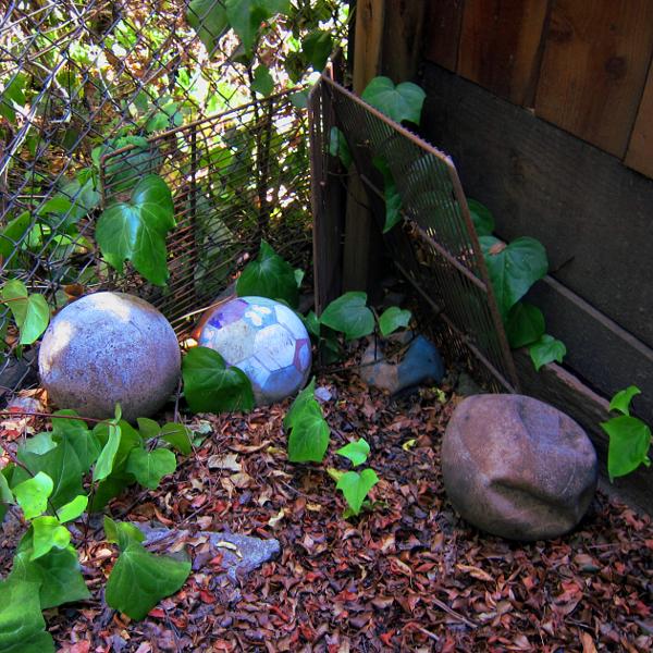 Lost balls, Oakland backyard