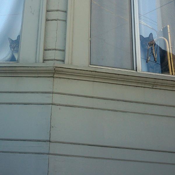 Fruitvale cats in windows