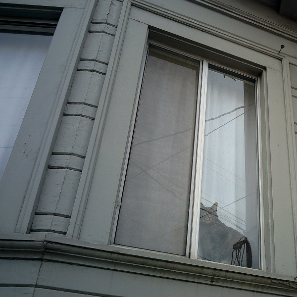 Fruitvale cats in windows