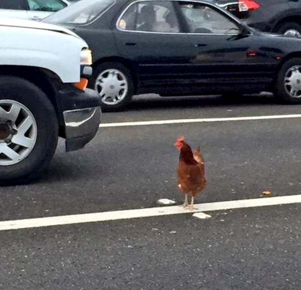 The Bay Bridge Chicken