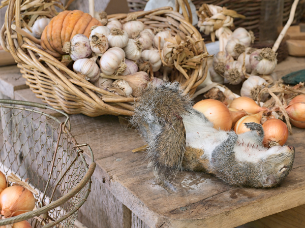 Lucas Foglia, Harvest with Squirrel