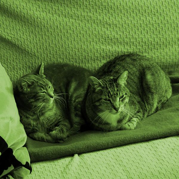 Feral housecats
