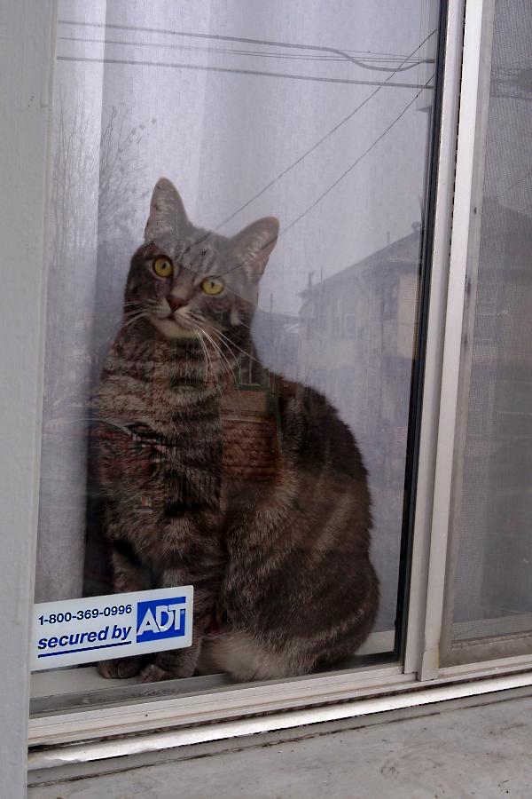 Russell in window, January 2015